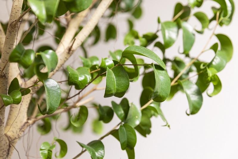 インテリアにグリーン観葉植物を置いてみませんか? Vol.3