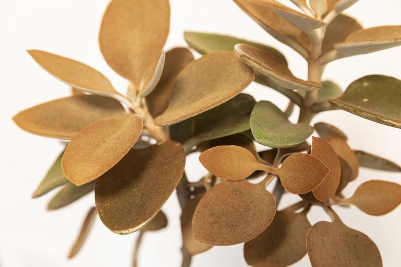 インテリアにグリーン観葉植物を置いてみませんか?