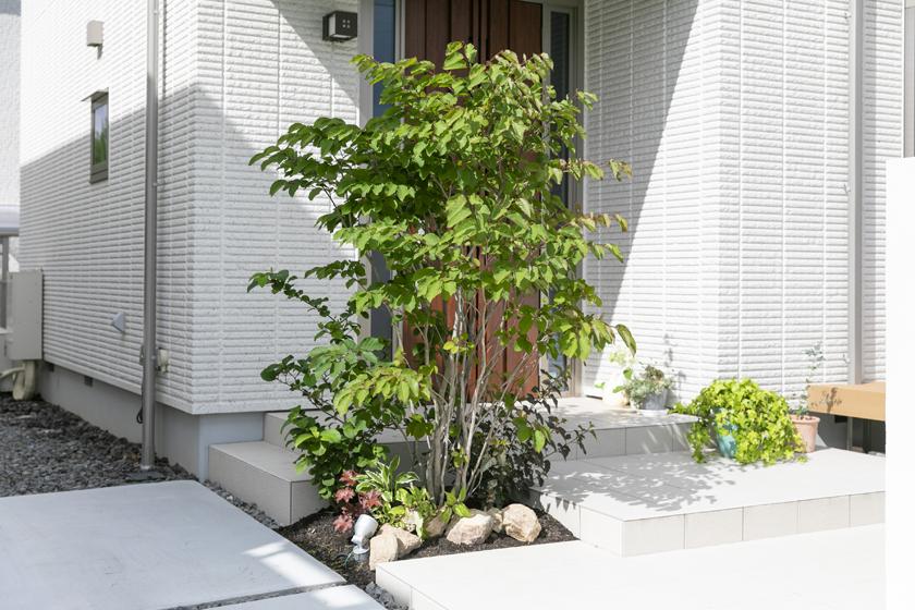 オトコヨウゾメ,植栽,お庭,ガーデン