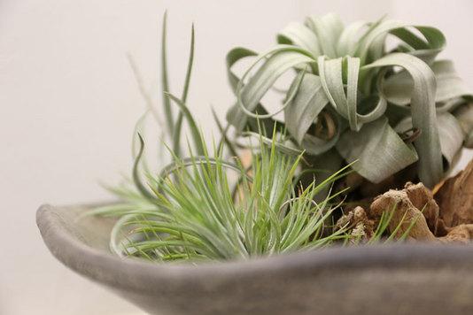 インテリア、観葉植物
